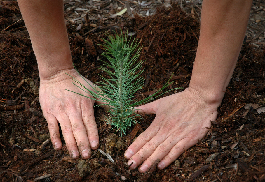 tree planting eco-friendly