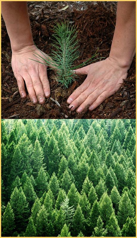 eco-friendly log homes